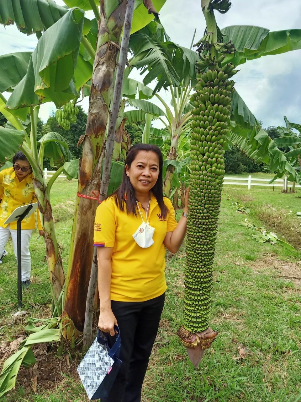 สวนกล้วย-วลัยลักษณ์_๒๐๑๐๒๙_42