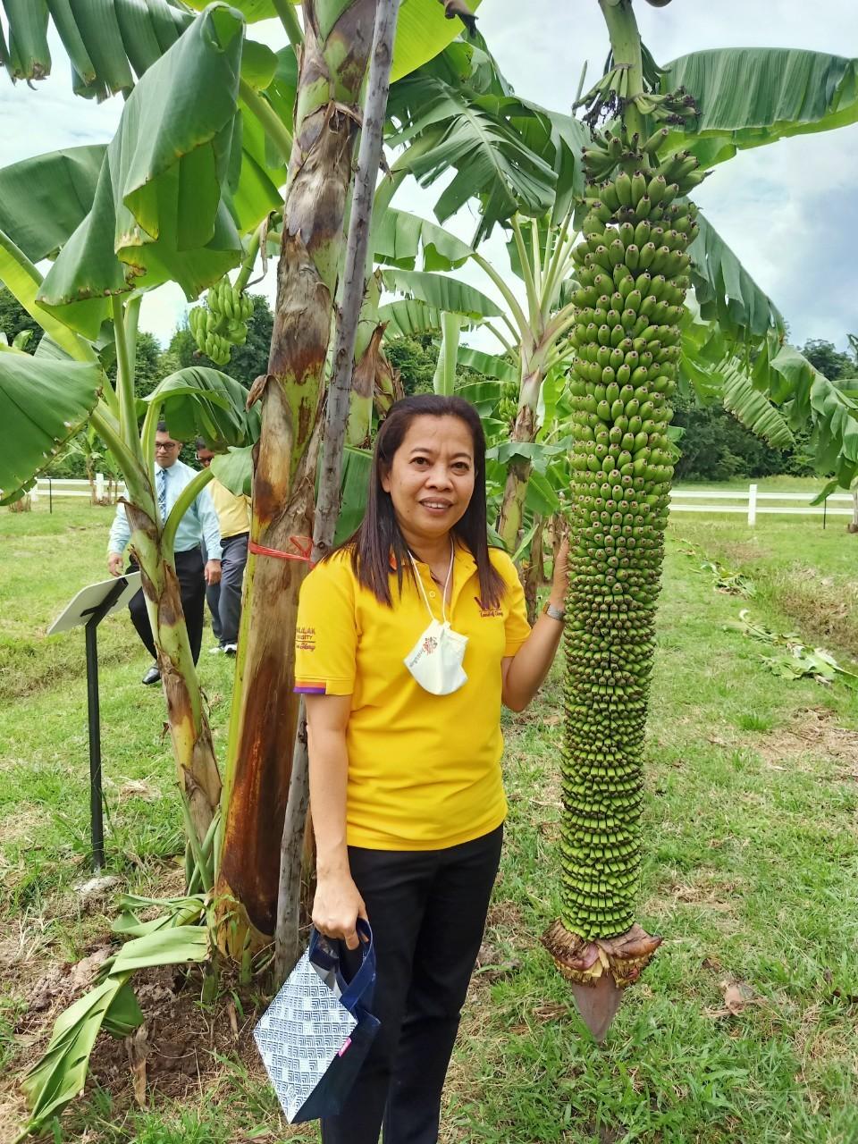 สวนกล้วย-วลัยลักษณ์_๒๐๑๐๒๙_43