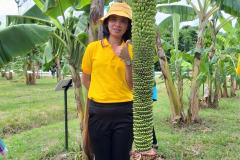 สวนกล้วย-วลัยลักษณ์_๒๐๑๐๒๙_5